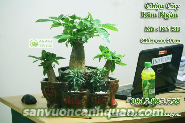 cay-kim-ngan-1-600x400 Trồng cây Kim Ngân sẽ mang lại thần tài đến với bạn