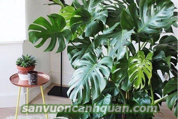 cay-canh-noi-that-1 Trang trí căn nhà của bạn trở nên tươi đẹp với những cây cảnh nội thất