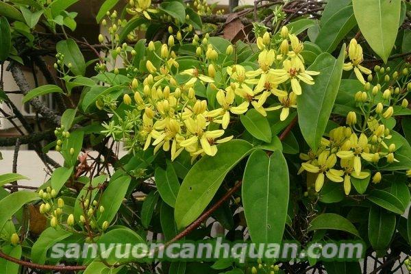 cay-chiu-nang-1-1-600x400 Những loại cây chịu nắng tốt mà bạn nên trồng mà không ngại nắng gắt