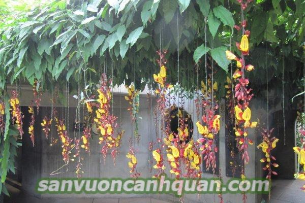 Những loại cây chịu nắng tốt mà bạn nên trồng mà không ngại nắng gắt hình 5