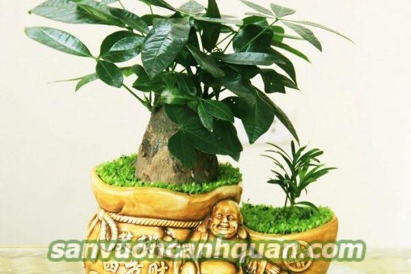 cay-de-ban-1-600x400 Những cây để bàn vừa đẹp lại mang đến may mắn với bạn