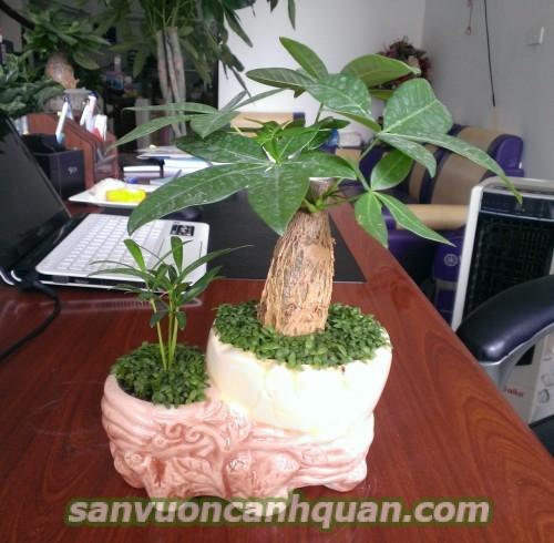 Những cây để bàn vừa đẹp lại mang đến may mắn với bạn hình 5