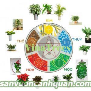 cay-van-nien-thanh-5-300x300 Những cây hợp tuổi phong thủy sẽ giúp công việc thuận lợi tiền tài phú quý đến với bạn