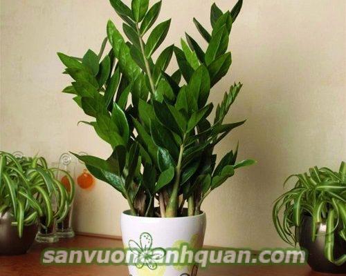 cay-hop-tuoi-1-500x400 Những cây hợp tuổi phong thủy sẽ giúp công việc thuận lợi tiền tài phú quý đến với bạn