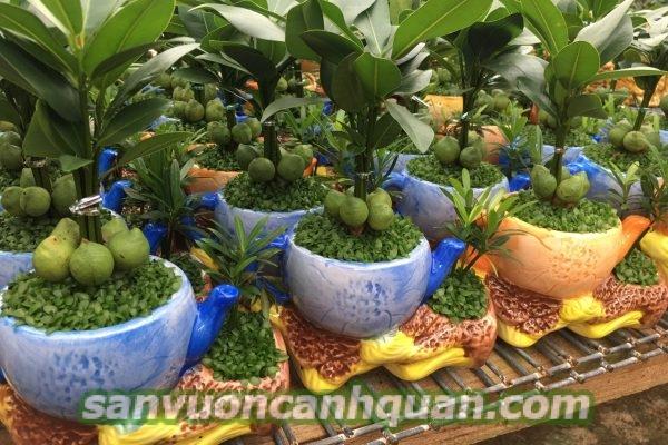 cay-qua-tang-khai-truong--600x400 Gợi ý những cây quà tặng khai trương mang đến tài lộc cho gia chủ