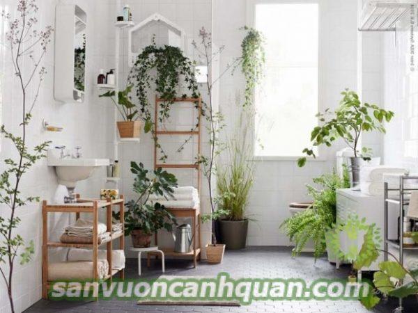 Gợi ý những cây trong nhà vừa đẹp lại loại bỏ khí độc khỏi nhà bạn hình 5